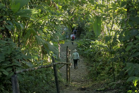 Heliconias Medicinal Plant Trail